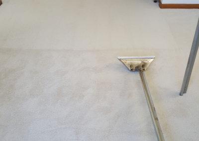 Fraser_Coast_Carpet_and_Pest_Gallery-Image-3